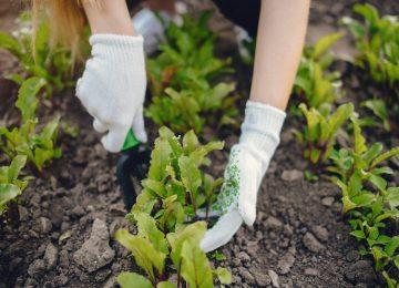 Ekim ayında hangi sebze ekilir